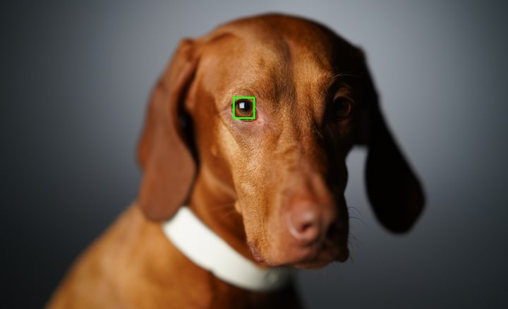 Real Time Eye AF con tracking dello sguardo di animali