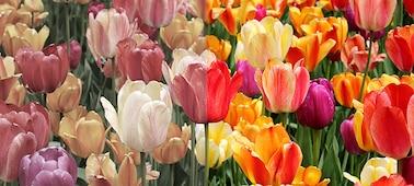 Slika prikazuje naravne barve z XR Triluminos PRO ™