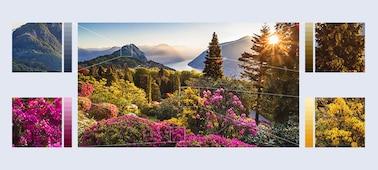 Izjemno podrobne slike gorskih cvetov z XR HDR Remaster