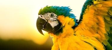 Slika papige s podrobnostmi 4K