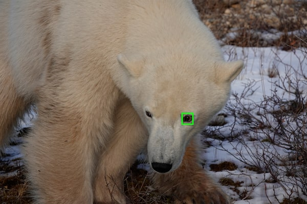 Funzione Real Time Eye AF per animali
